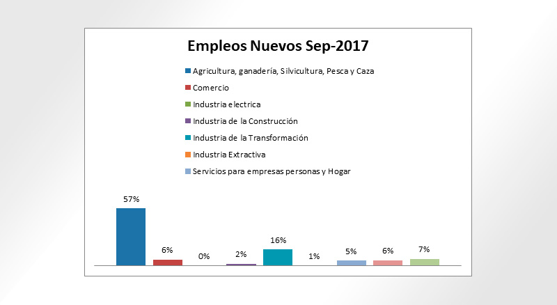 Empleos nuevos generados por sector en Ensenada.